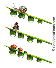 dew drop with snail,butterfly and ladybugs isolated on white