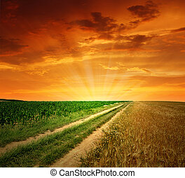 field way  - sunset above the field way