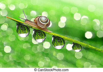 Snail on dewy grass close up