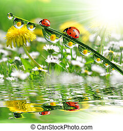 dew drops with ladybugs close up