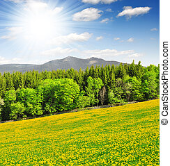 national park Sumava - Spring landscape in the national park...