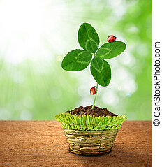 Clover in decorative pot on green background