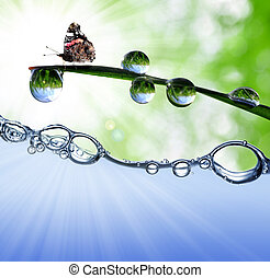 dew drops and butterfly - grass with dew drops and butterfly...