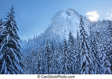 Snow Covered Evergreens Forest Snow Mountain Cascade Mountains Snoqualme Pass Washington