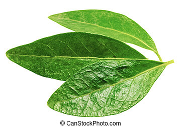 Three green leaf isolated on white background . - Three...