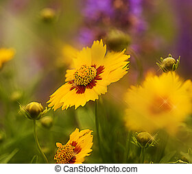 Garden of Sunshine - Photo/illustration - garden of bright...
