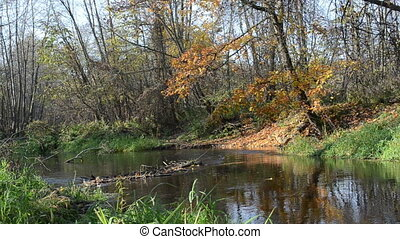 river water flow autumn - small park river water flow...