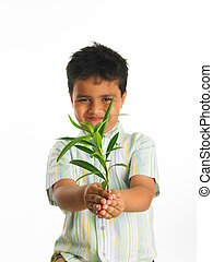 boy holding a green sapling - Asian boy holding a green...