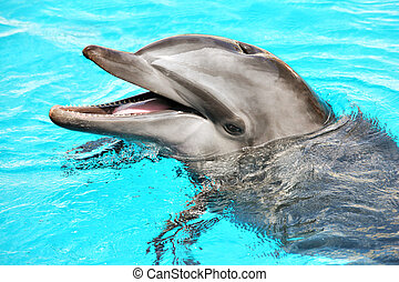 Friendly dolphin - A portrait of a friendly dolphin smiling...