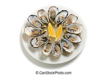 A dozen oysters on a plate