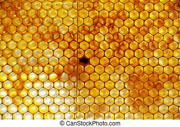 Honey Comb with pollen, sunlight background lightning