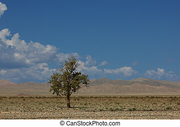 Lonely tree in mountains. Mongolia