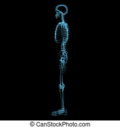 Human skeleton 3D xray blue transparent - Human skeleton 3D...