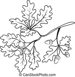 Oak branch with acorns, outline - Oak branch with leaves and...