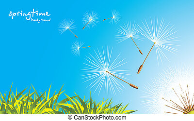 Grass and fluffy dandelion. Vector illustration
