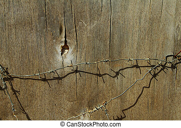 texture tree with barbed wire - partie de la surface du...