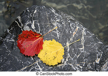 Colorful leaves on the stone