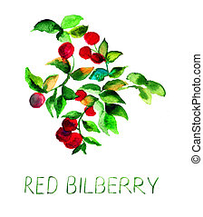 Red bilberry, watercolor illustration