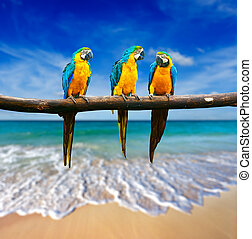 Tropical vacation concept - three parrots Blue-and-Yellow...