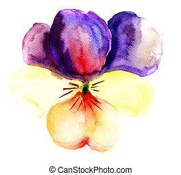 Violet flower, watercolor illustration