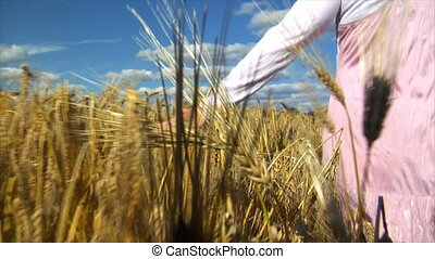 womans hand brushing wheat field - A womans hand brushing...