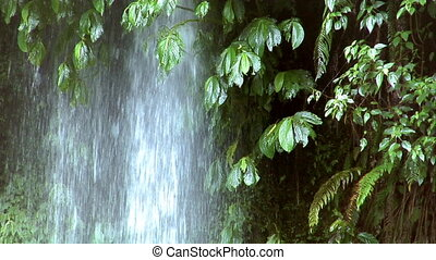 waterfall under tree