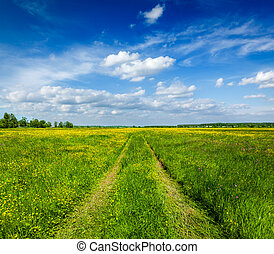 Spring summer - rural road in green field scenery lanscape -...