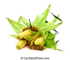 Ears of corn - Three ears of corn isolated on a white...