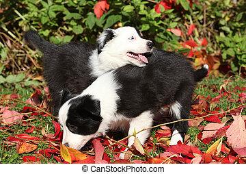 perritos, hojas, dos, rojo, juego