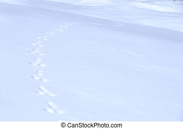 animal traces on snow - animal traces on fresh clean white...