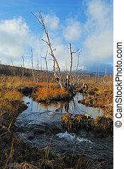 Creek with boggy coast. October 9