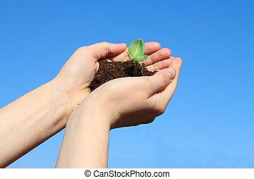 Sapling in female hands