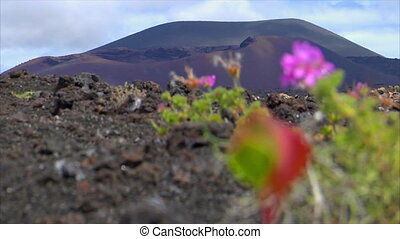 plant living on dead volcanic ground defocus