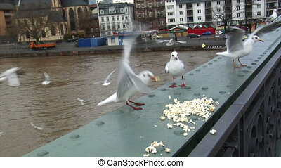 feed seagulls frankfurt skyline slo - People feeds gulls in...
