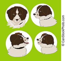 Four images of the dog's head in different corners