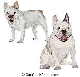 Two images of white French bulldog in different poses on...