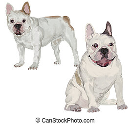 Two images of white French bulldog