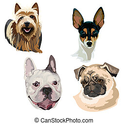 Four different breeds of dog muzzl - Images of the four...