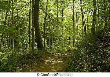 Trail, Pisgah Nat Forest, Western NC - Trail, Pisgah...