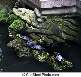 Turtles Temple Garden Baoguang Si Shining Treasure Buddhist Temple Chengdu Sichuan China Front of Temple