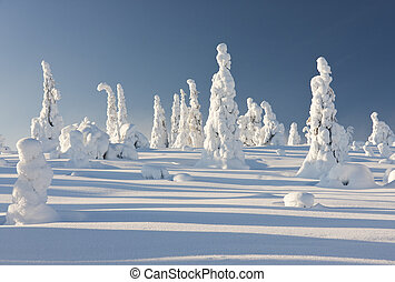 Snowy forest in Lapland, Finland - Snowy forest with slim...