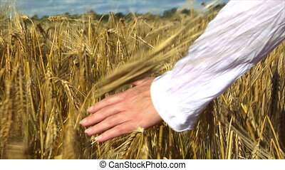 womans hand brushing wheat field