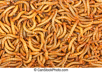 Background of mealworms - Background texture of mealworms