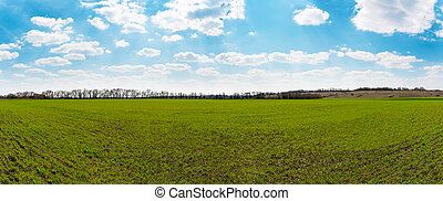Panorama of green field - Panoramic view of spring green...