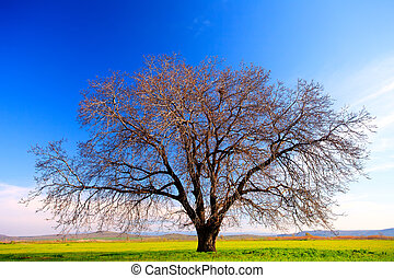tree background - alone tree in clear green and blue nature...
