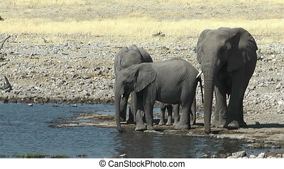 elephants arriving at waterhole