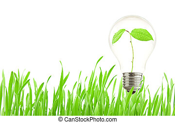 Plant growing inside the light bulb - Green eco energy...