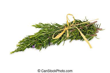 Rosemary herb leaf sprig in flower