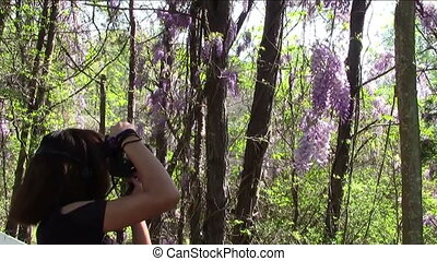 Photographing Lilacs - Young woman trying to photograph...