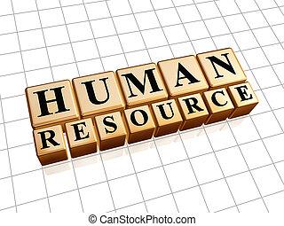 humano, recursos, dorado, cubos